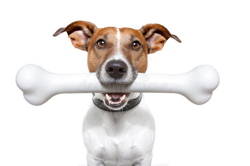 Hund mit einem weißen Knochen lizenzfreie stockfotografie