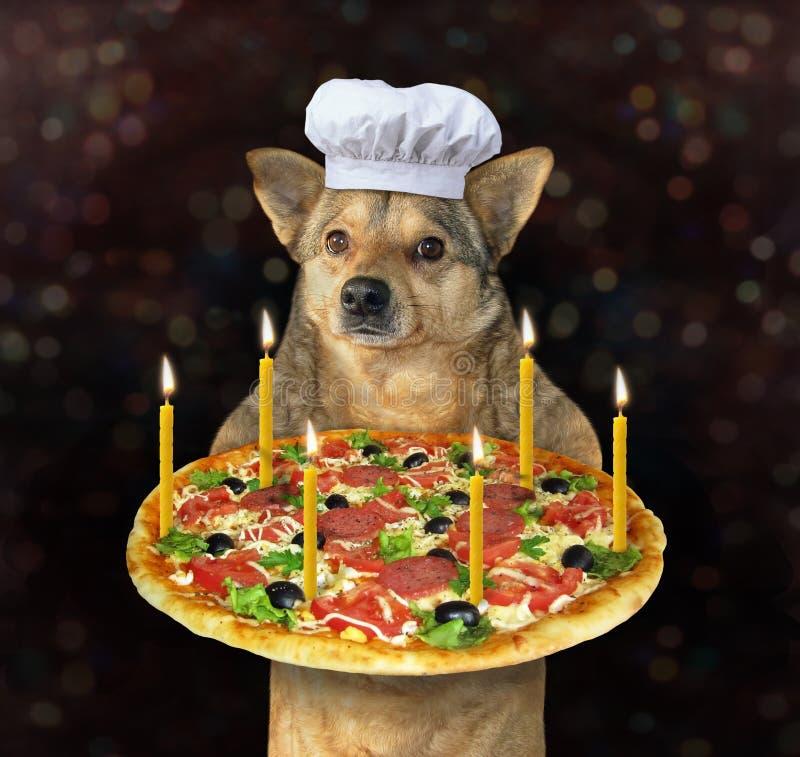 Hund mit einer Feiertagspizza lizenzfreie stockfotos