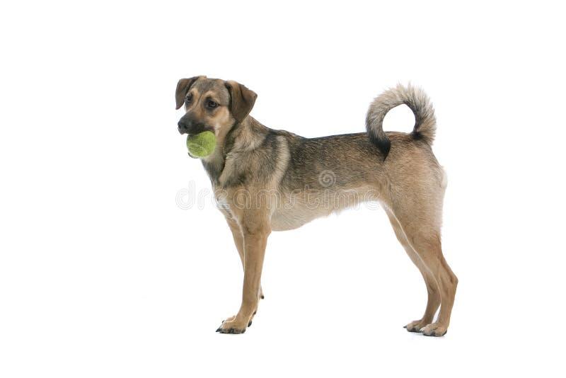 Hund mit einer Kugel stockfoto