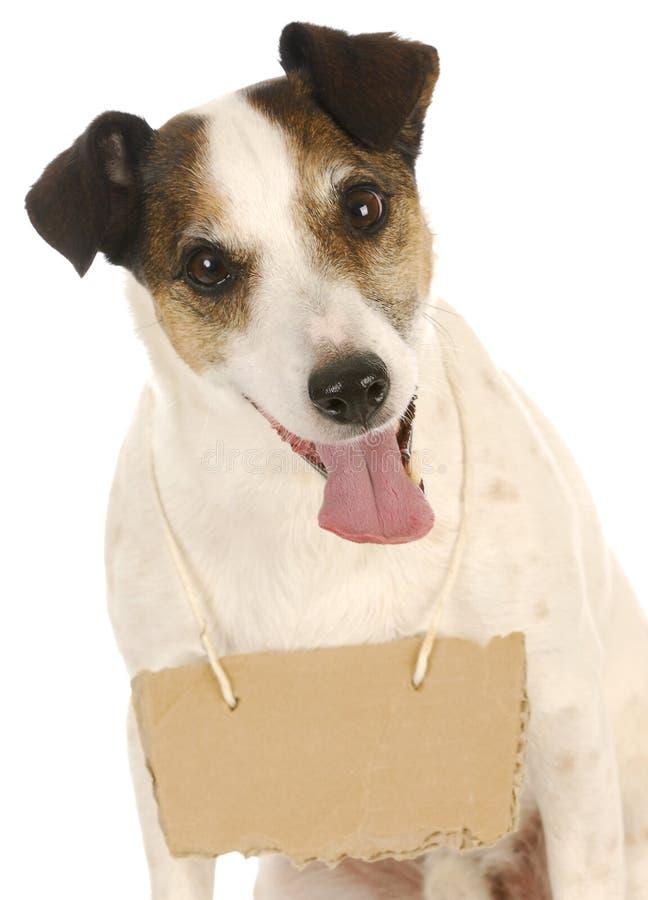 Hund mit einer Meldung stockbilder