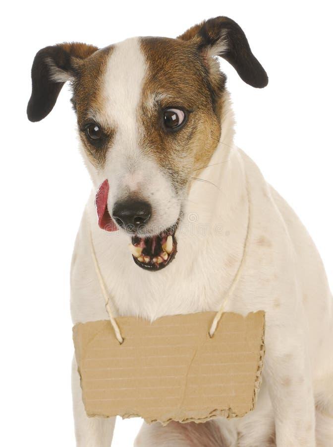 Hund mit einer Meldung stockfotografie