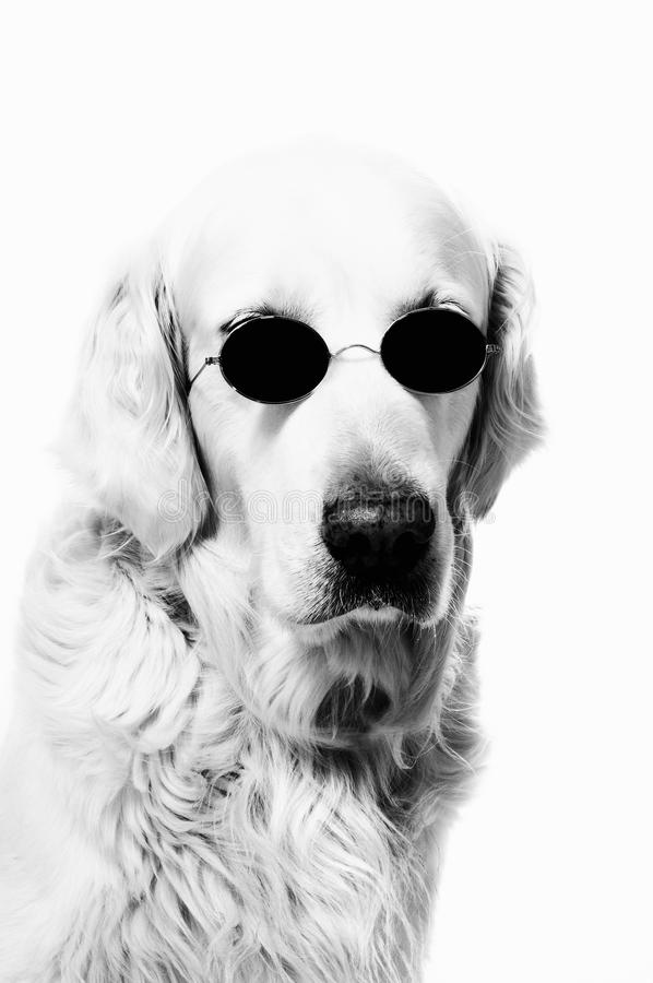 Hund mit Gläsern stockbilder