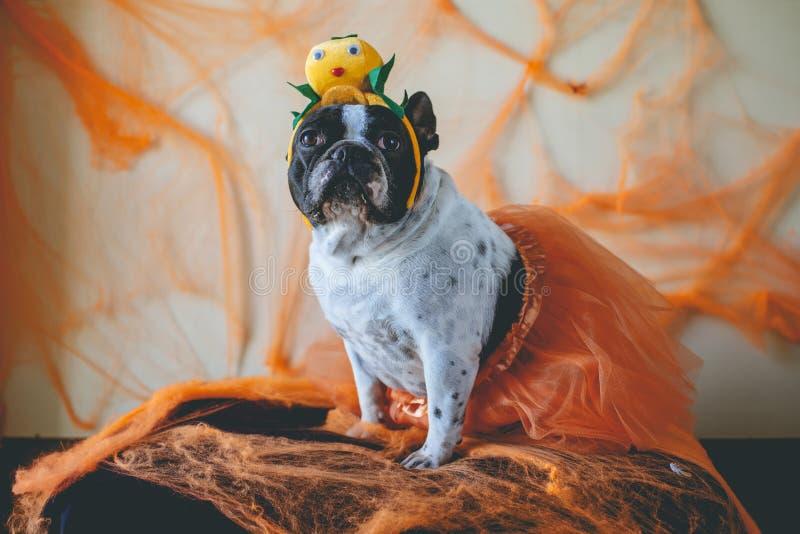 Hund mit Halloween-Kostüm stockbilder