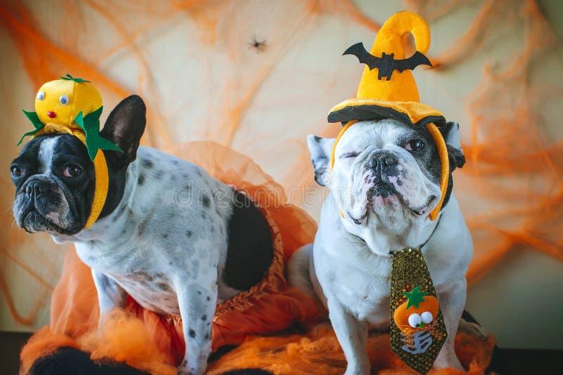 Hund mit Halloween-Kostüm lizenzfreies stockfoto