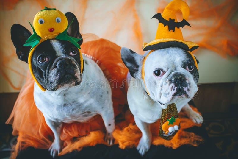 Hund mit Halloween-Kostüm stockfotos