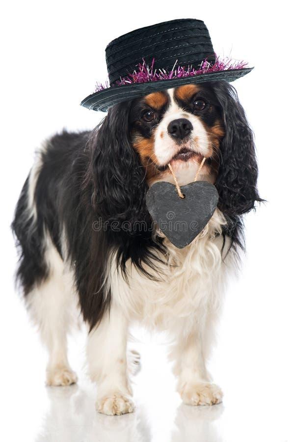 Hund mit Herzen stockbild