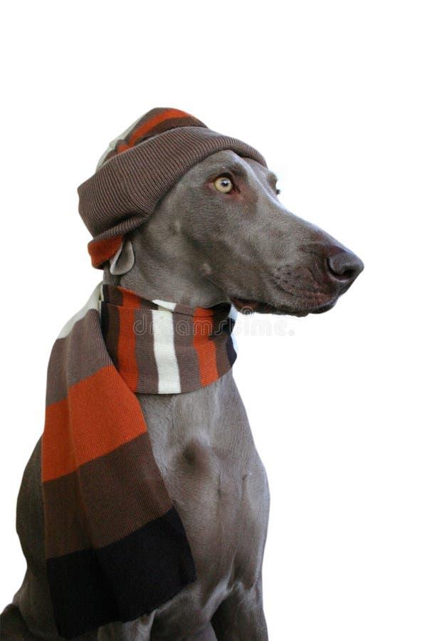 Hund mit Hut und Schal stockfoto