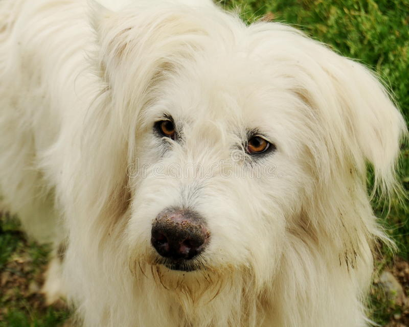 Hund mit klugem Blick lizenzfreie stockfotos