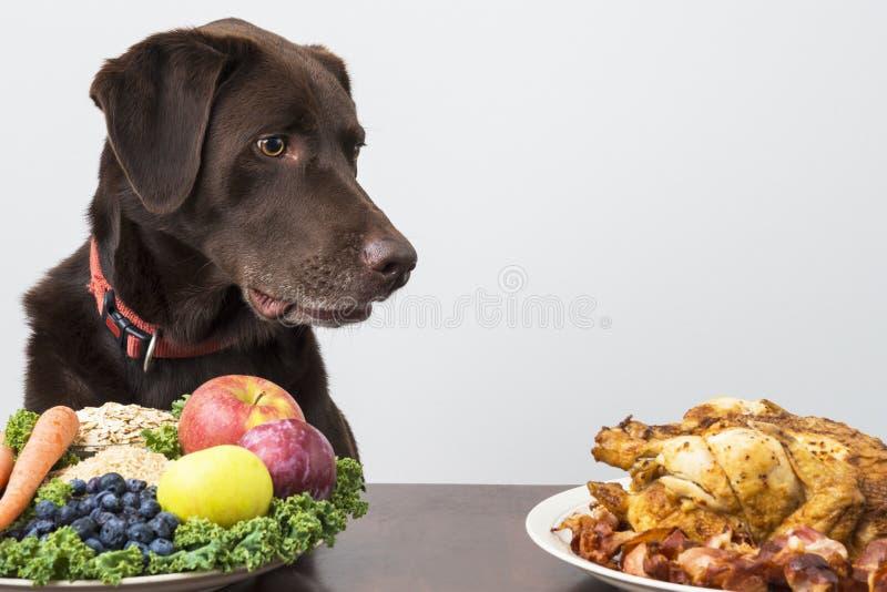 Hund mit Lebensmittel des strengen Vegetariers und des Fleisches stockfoto