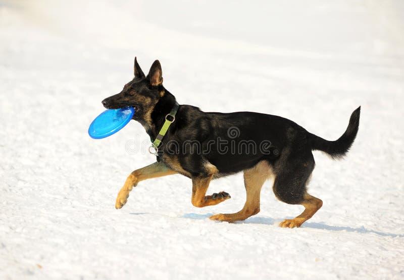 Hund mit Platte lizenzfreies stockfoto