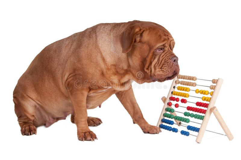 Hund mit Rechenmaschine stockbilder