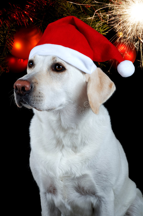 Hund mit Sankt Hut lizenzfreie stockbilder