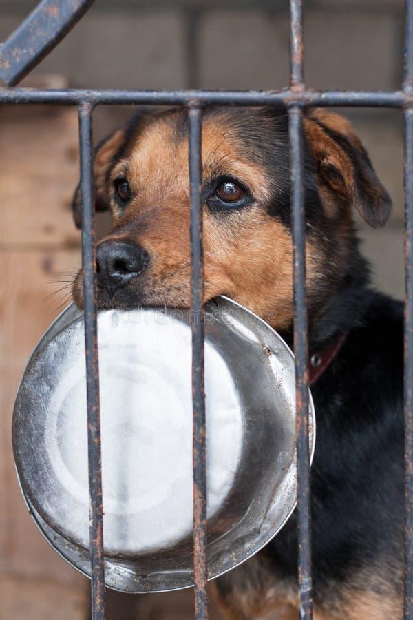 Hund mit Schüssel lizenzfreies stockfoto