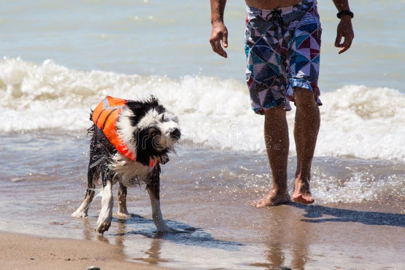 Hund mit Schwimmwesteerschütterungen stockfotografie