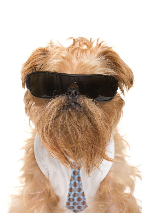 Hund mit Sonnenbrille stockbild