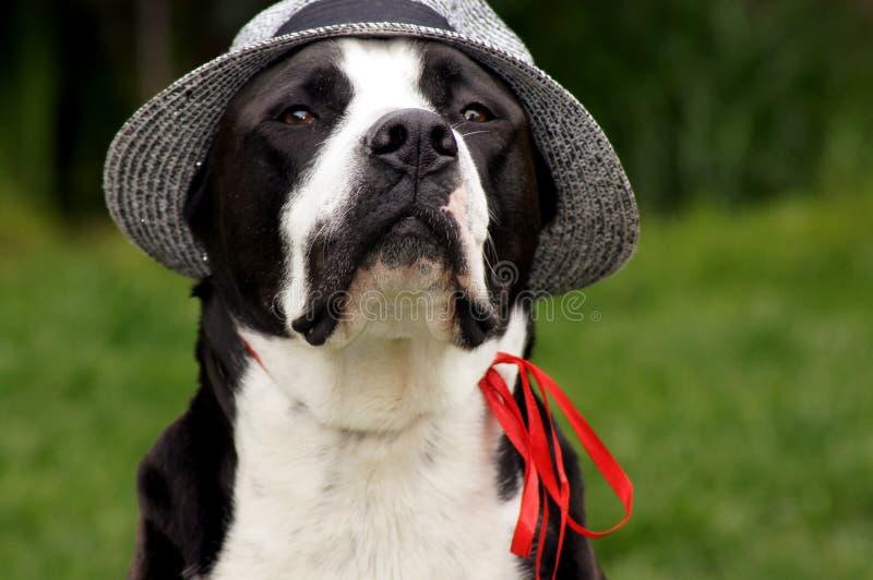 Hund mit Sonnenhut auf der grünen Wiese royalty free stock photography