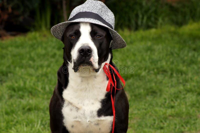 Hund mit Sonnenhut auf der grünen Wiese royalty free stock images