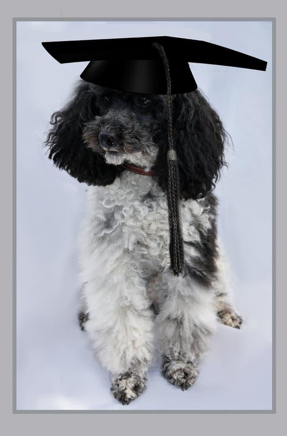 Hund mit Staffelungskappe lizenzfreie stockbilder