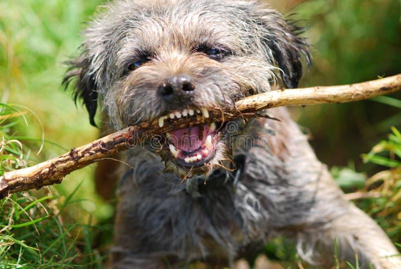 Hund mit Steuerknüppel stockbilder