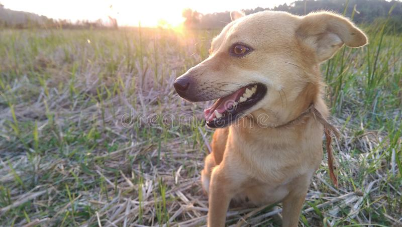 Hund mit Sun-Satz stockbilder