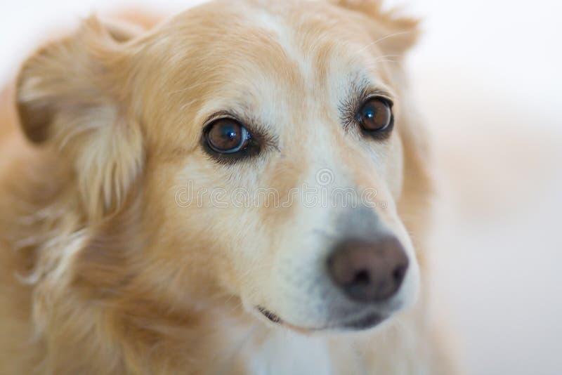 Hund mit traurigem Ausdruck lizenzfreie stockbilder