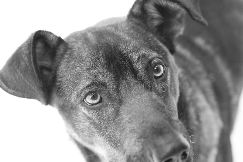 Hund mit traurigem Blick stockfotografie