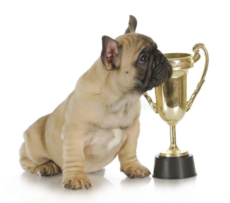 Hund mit Trophäe lizenzfreie stockfotografie