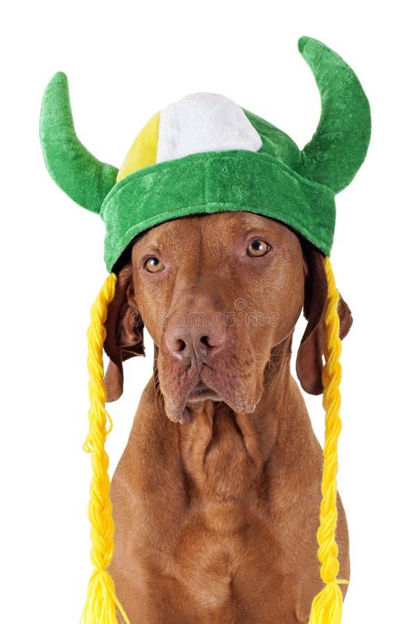 Hund mit Wikinger-Hut lizenzfreies stockfoto
