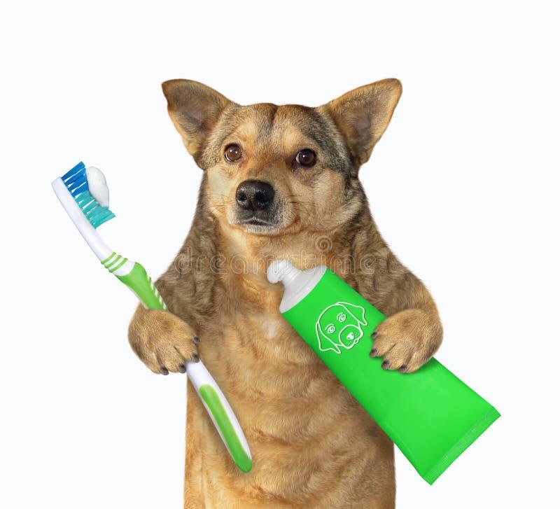 Hund mit Zahnbürste und Zahnpasta lizenzfreie stockfotos