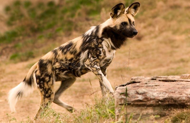 Hund nicht Ihr Mutter lizenzfreie stockfotografie