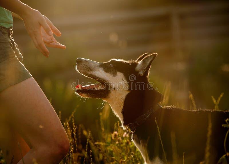 Hund obidient lizenzfreies stockbild