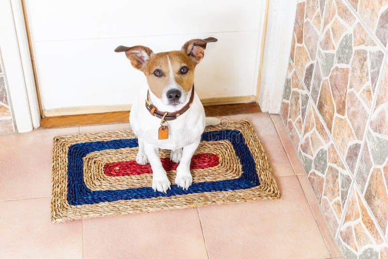 Hund och ägare med koppeln arkivfoton