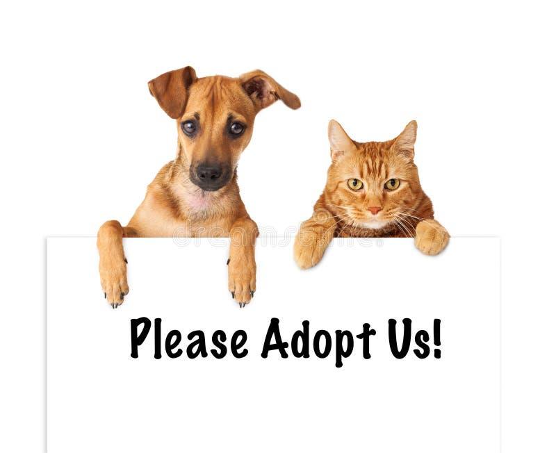 Hund och Cat Adopt Us royaltyfria bilder
