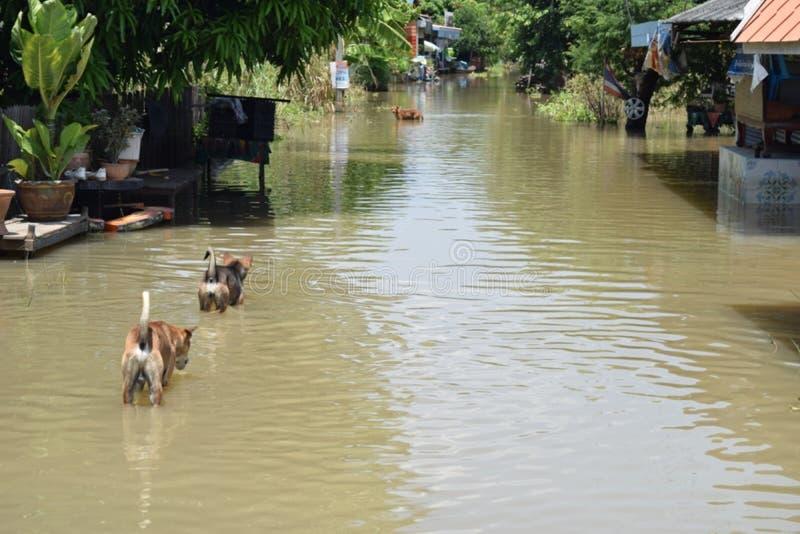 hund och en flod royaltyfri foto