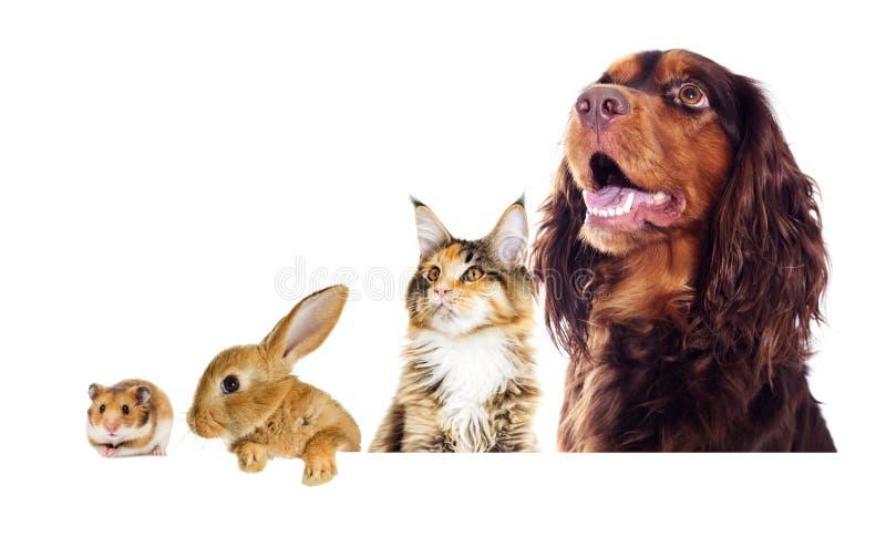 Hund och en katt som från sidan ser royaltyfria foton