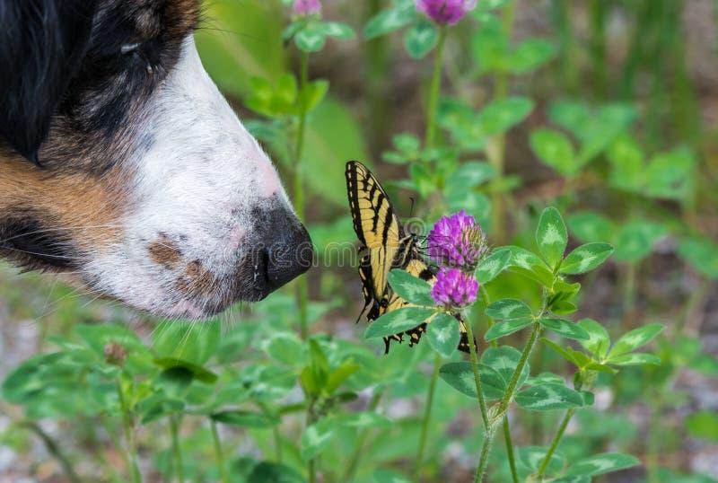 Hund och fjäril royaltyfri fotografi