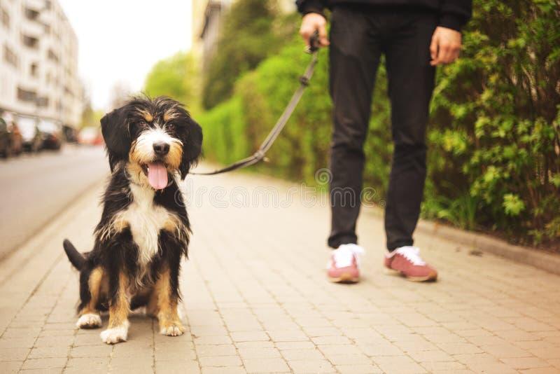Hund och hans ägare - kall hund och unga mannen som har gyckel i en parkera - begrepp av kamratskap, husdjur, samhörighetskänsla  royaltyfria bilder