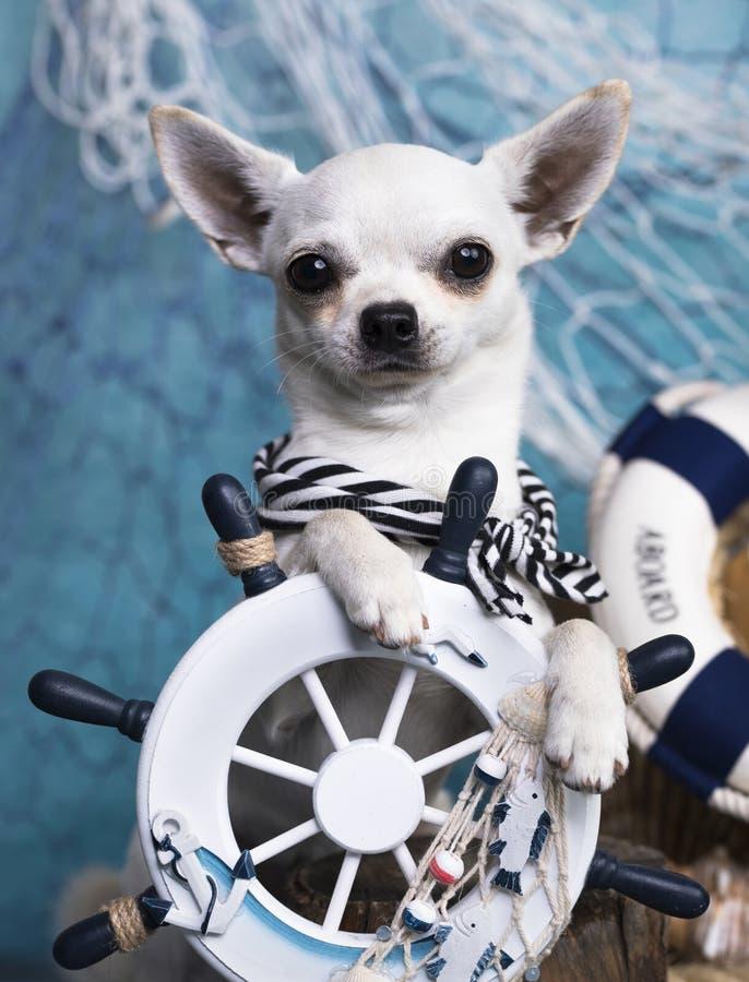 hund- och havsgarneringar royaltyfria bilder