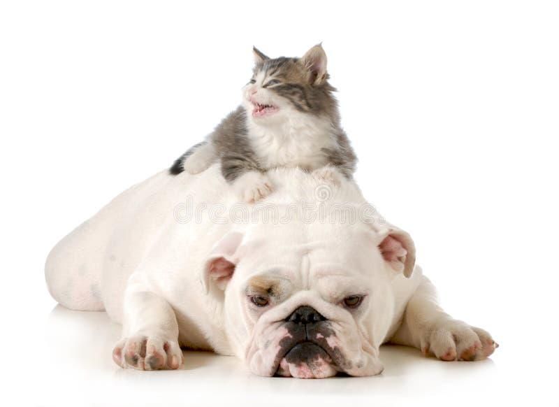 Hund och katt fotografering för bildbyråer