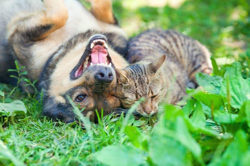 Hund och katt som tillsammans spelar arkivfoton