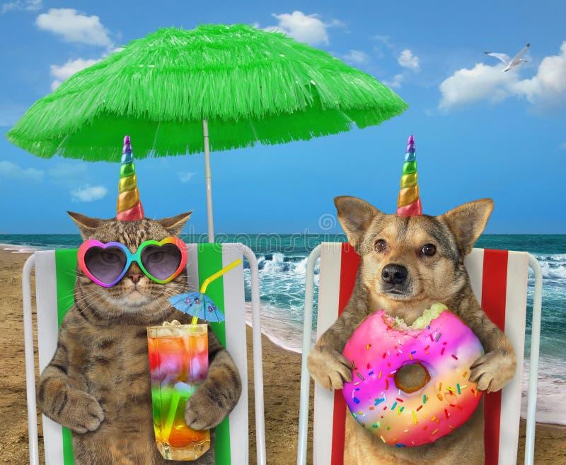 Hund och katt som vilar på stranden 2 arkivfoton