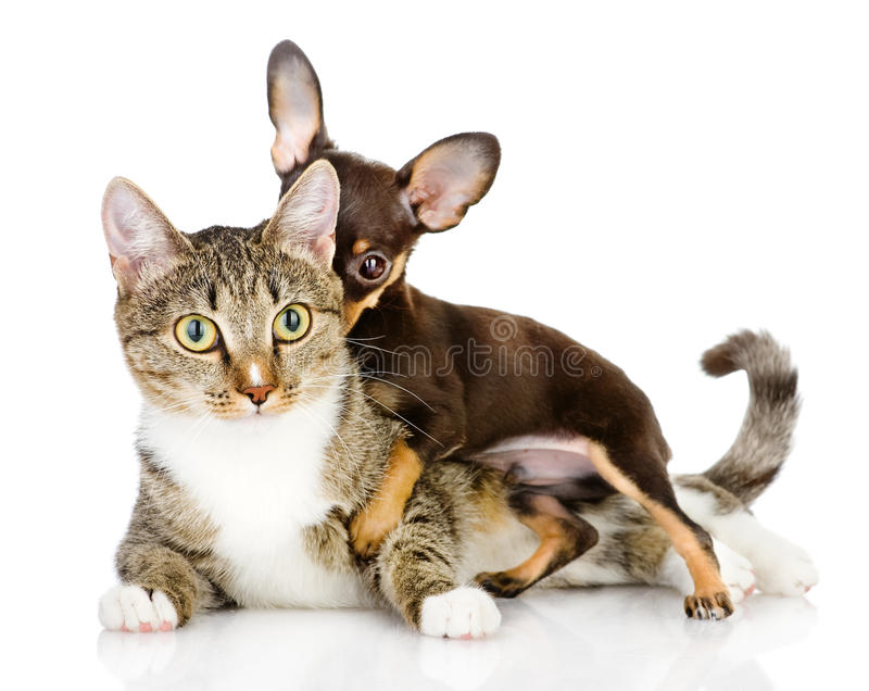 Hund och katt tillsammans. royaltyfria bilder