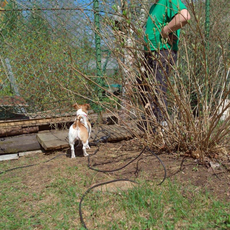 Hund och man i en trädgård royaltyfri foto