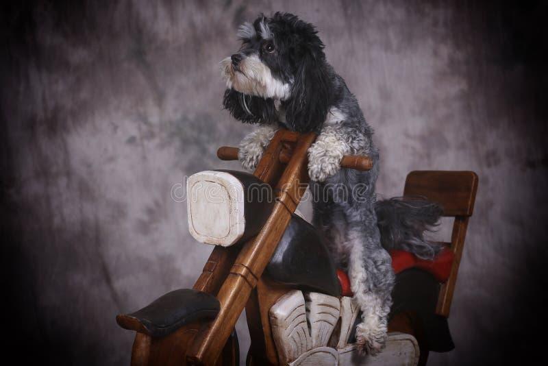 Hund och moped arkivfoto
