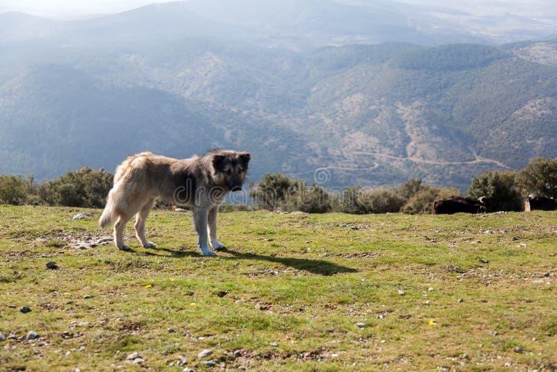 Hund och natur arkivbilder
