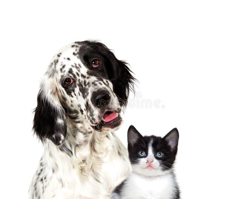 Hund och se för kattunge royaltyfri bild