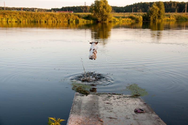 Hund och sjö arkivbild
