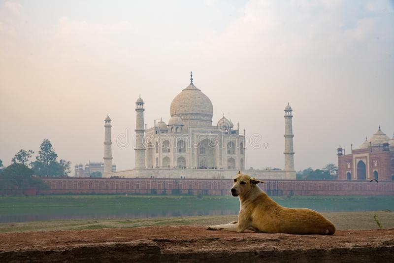 Hund och Taj-Mahal royaltyfria foton