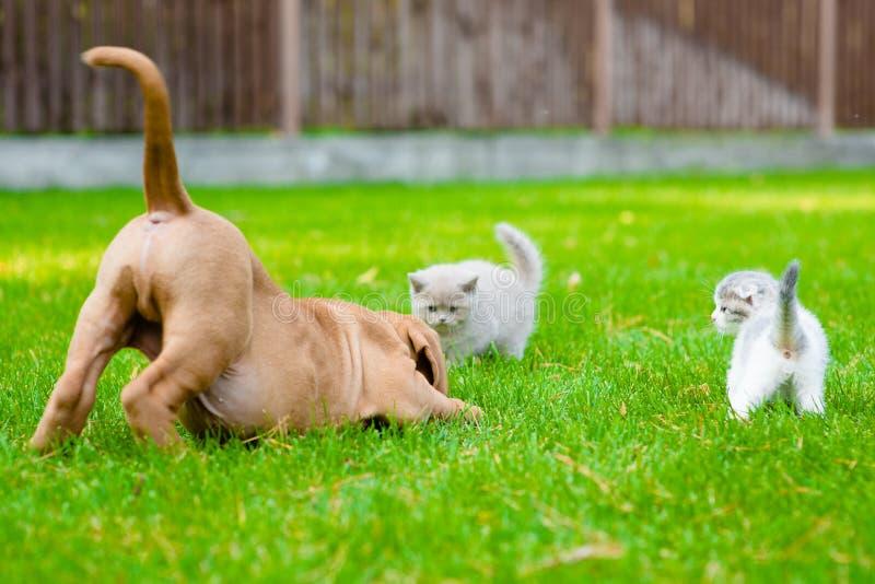 Hund och två kattungar som tillsammans spelar utomhus- arkivfoton