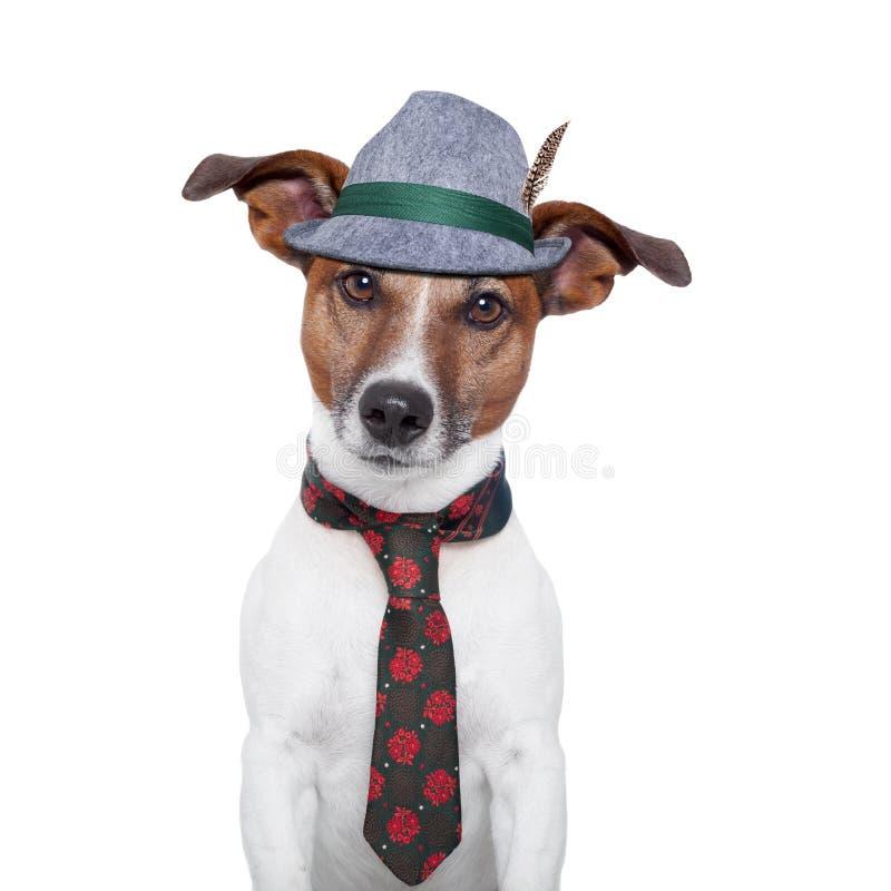 Hund oktoberfest stockfoto
